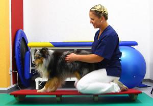 Tierarztpraxis Dr. Juppien