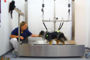 Physiotherapie Hunde Münster