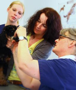 Behandlung von Kleintieren in Münster