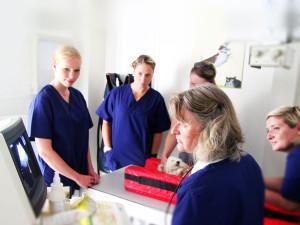 Tierarzt Dr. Juppien Münster Praxis