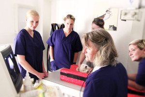 Tierarztpraxis Dr. Juppien Müsnter