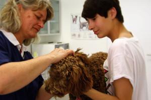 Behandlung Tierarzt Münster